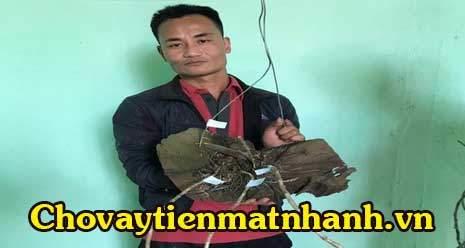 Bắt nhóm trộm vườn lan giá tiền tỷ ở Lâm Đồng